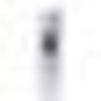 L'Occitane Shea Butter Lip Balm Stick 4.5g