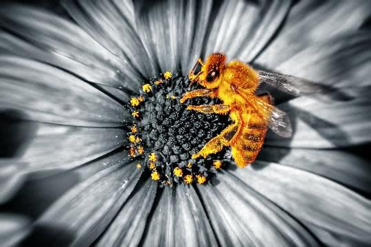 Is beeswax vegan?